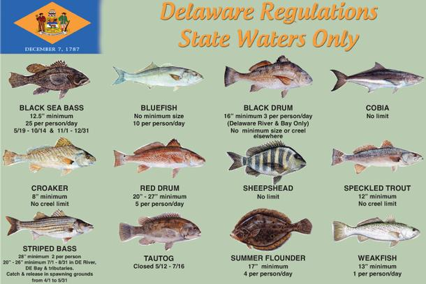 Delaware pwc laws for Maryland non resident fishing license
